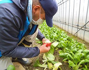 農耕事業イメージ画像